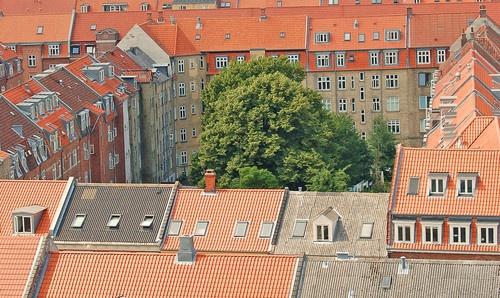 City tree by Rune_andersen