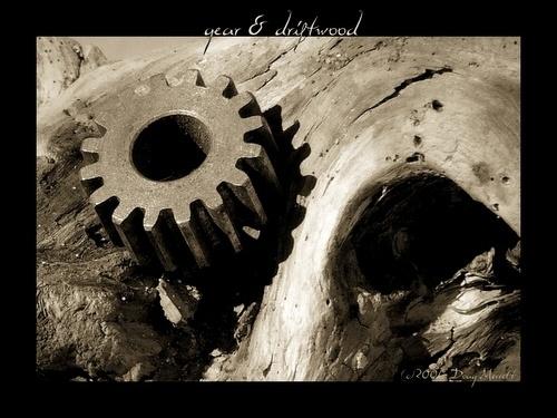gear & driftwood by sputnki