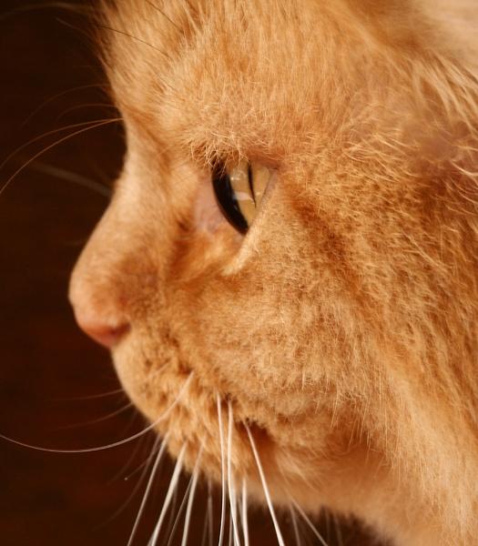 Cat\'s Eye by AngelaD