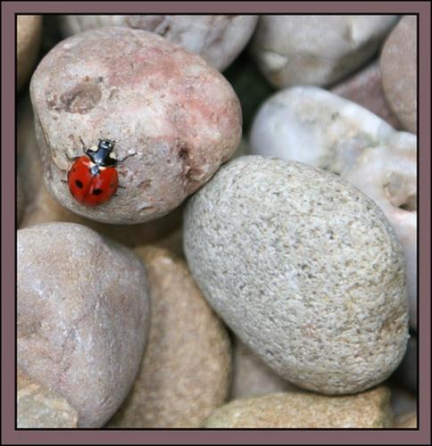 ladybird by Dorothea
