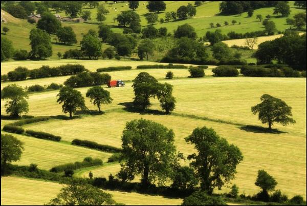 Still Making Hay by backbeat