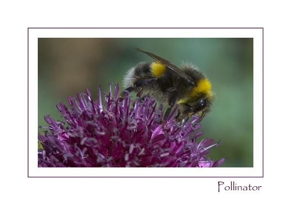 Pollinator by AlleyCatz