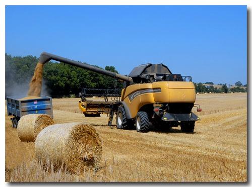Harvesting by almar_digital