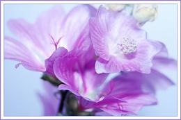 i like lilac