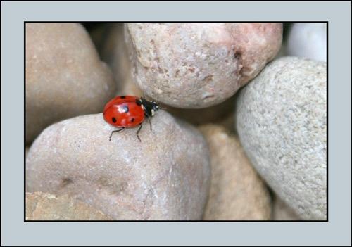 Ladybird2 by Dorothea