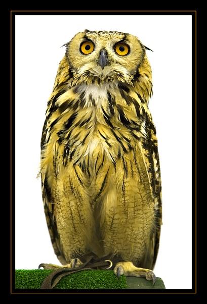 Owl by kwaterworth