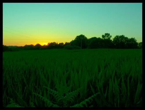 Corn by scottf75