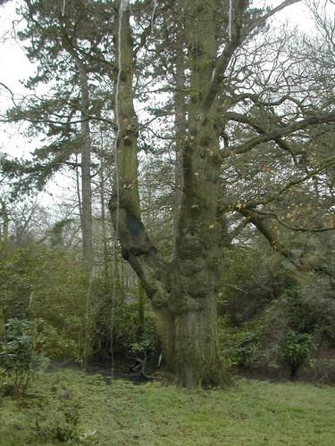 fairy tree by RaeHart