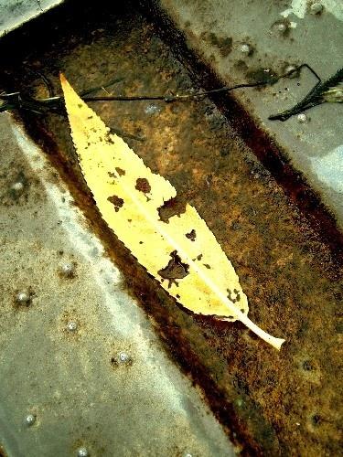 Rusty yellow leaf by ktish