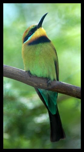 kingfisher ???? by kelmac