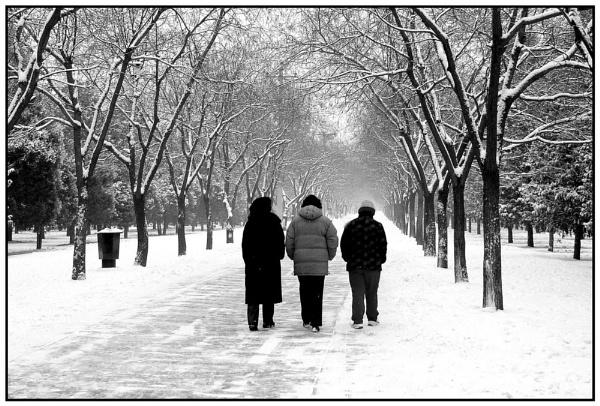 Winter Walk by SHAN_WONG