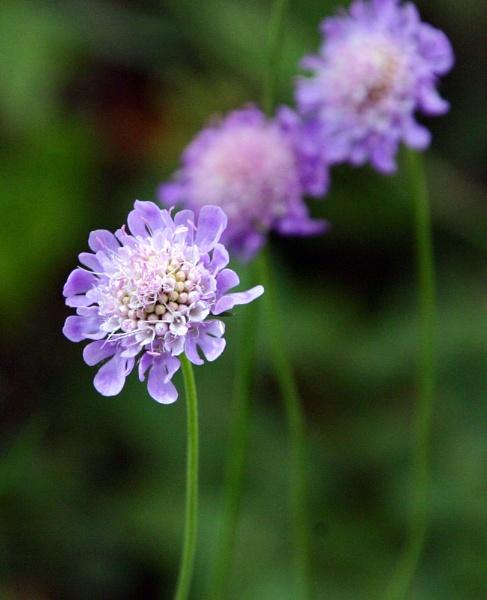 Purple by Pogs