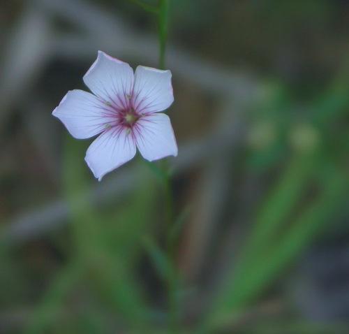 flower by avramionut