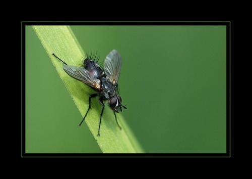 Fly by sferguk