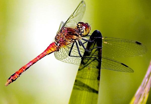Close up Dragon by faulknerstv