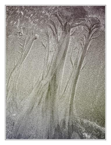 Woodland Fantasia by JohnHorne