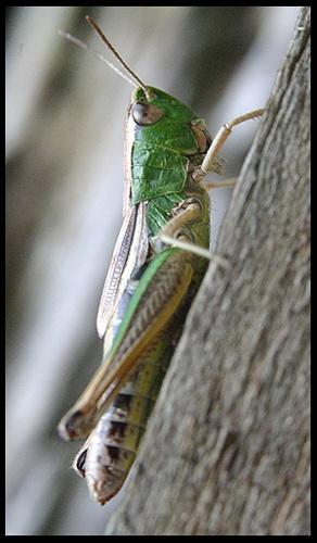 GreenHopper by DIGILUX