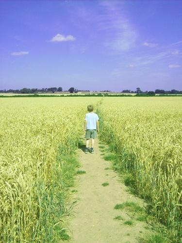 Boy in cornfield by portugal7