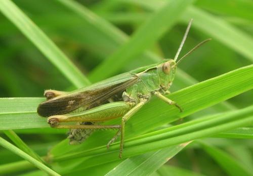 Green Hopper by DCWatters