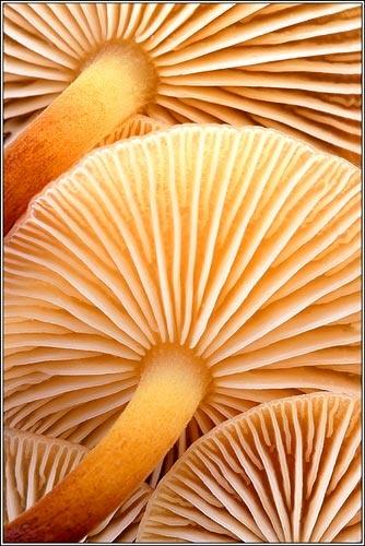 velvet shank mushrooms by barrywebb