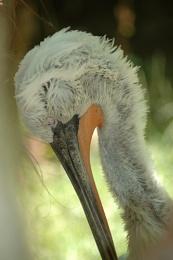 Stork . . .