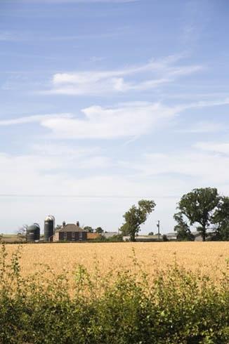Across the Corn Field by pjc