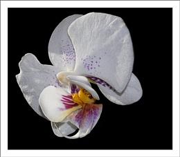 My last flower:)
