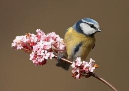 BT on Blossom