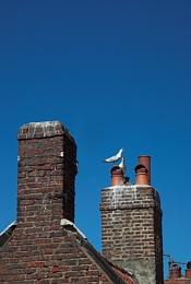 *chimney pots*