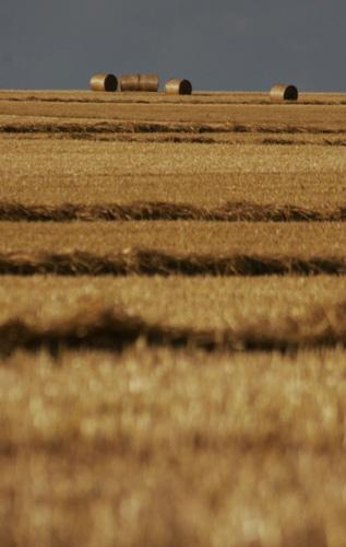 Hay Field by shellby