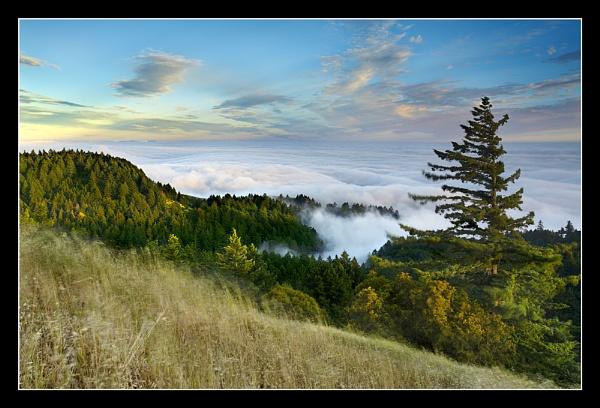 Tamalpais Redwoods by PatrickSmith