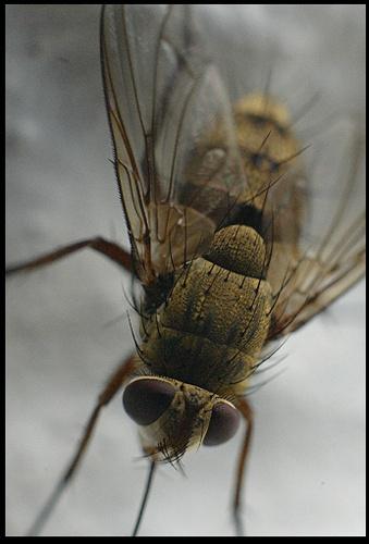 Mc Fly by DIGILUX
