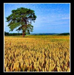 a crop shot