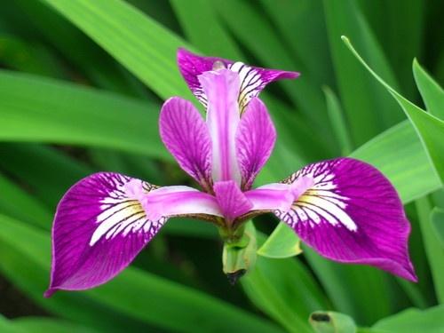 Flower by kenedwar