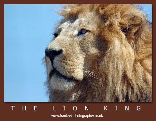 The Lion King by Frank_Reid