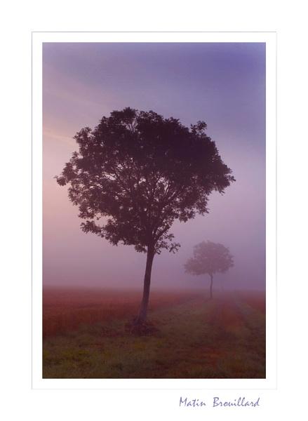 Matin  Brouillard by AlleyCatz