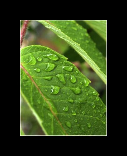 Wet leaf by MASTERC