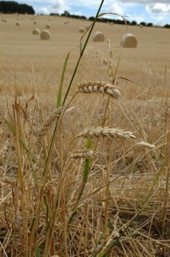 northumberland harvest by AEasthope67