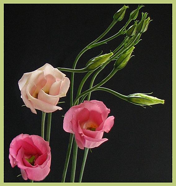 Pink Flowers by KarenFB