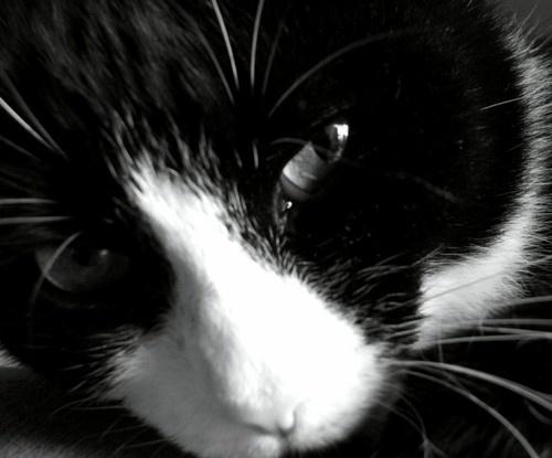 kitty by Simon-Gimson