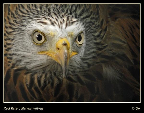 Beady eyes! by Oy_bumbler