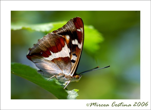 butterfly in the forest by mirceax