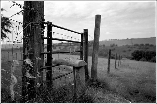 Wool-Stile by maljohns