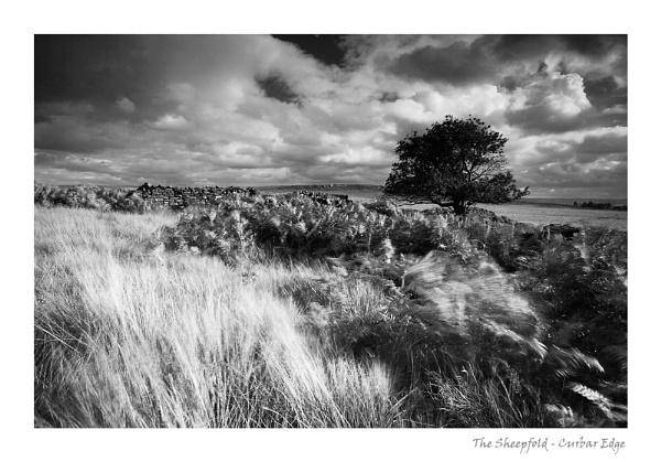 The Sheepfold by ian.daisley