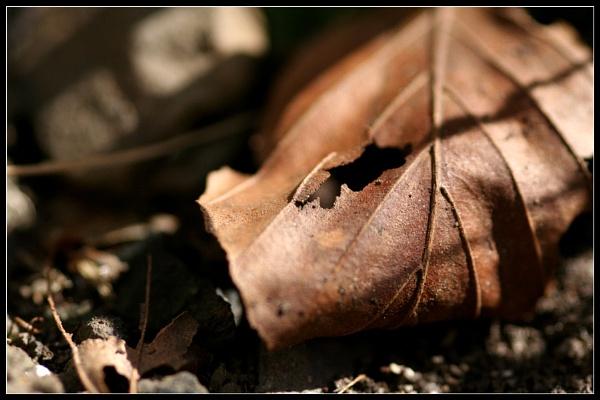 Leaf Grave by Morpyre