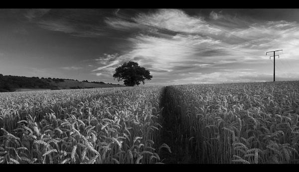 Golden Corn 2 by MarkT