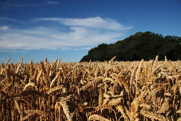 Harvest time by NickCoker
