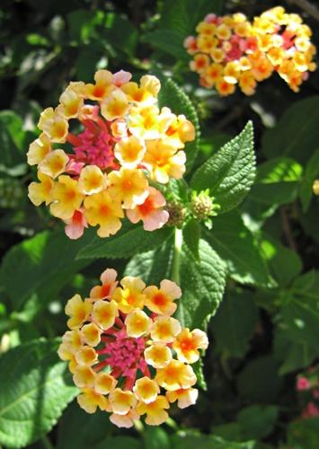 Sunlit flowers by heromole