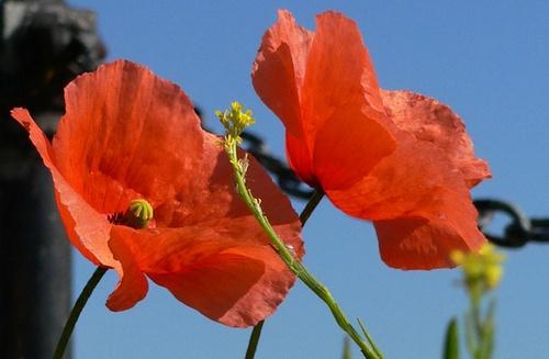 flowers by mcgregom