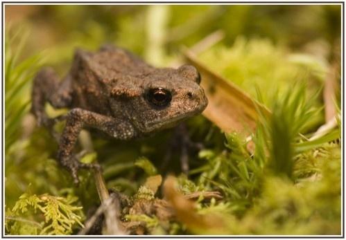 Frog by LumpyMM1